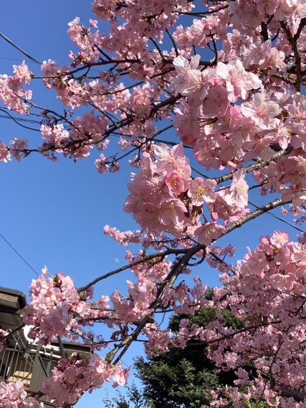 春の風物詩